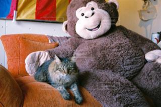 猫の隣に座っているぬいぐるみの動物のグループ - No.978129