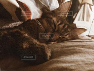 ベッドの上で横になっている猫 - No.978131
