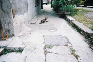 歩道の上に横たわる猫の写真・画像素材[1232967]