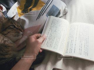 ベッドの上で横になっている猫の写真・画像素材[1257991]