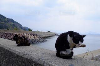 ビーチに座っている犬 - No.1258004