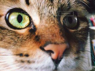 近くにカメラを見て緑の目を持つ猫のアップの写真・画像素材[1258011]