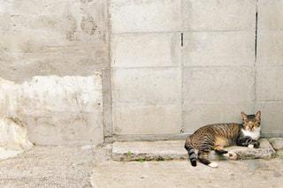 建物の上に横になっている猫 - No.1258015