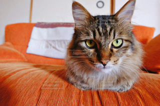 近くに猫のアップの写真・画像素材[1258017]