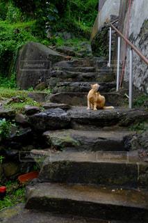 岩の上に立っているシロクマ - No.1258020