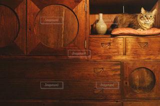 木のキャビネットの上に座っている猫の写真・画像素材[2928561]