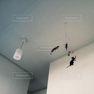 天井からぶら下がっている信号の写真・画像素材[2928557]