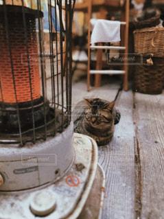 猫,動物,屋内,ペット,人物,ストーブ,お昼寝,ネコ,ぽかぽか