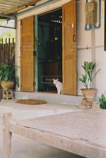 猫,建物,動物,海外,アジア,ペット,人物,玄関,観葉植物,ミャンマー,石,海外旅行,フィルムカメラ,草木,フィルム写真,ネコ,海外猫