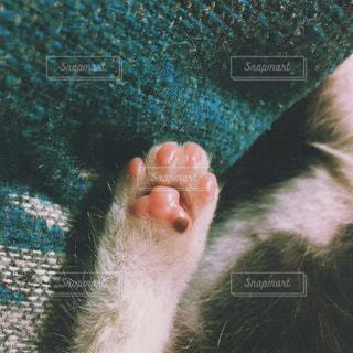 猫,動物,ピンク,ふわふわ,ペット,人物,肉球,可愛い,ネコ