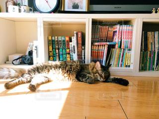 猫,動物,リビング,屋内,本,ペット,人物,棚,本棚,お昼寝,日向ぼっこ,お家,日向,ネコ,ぽかぽか