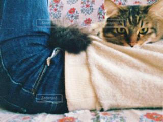 女性,1人,猫,動物,屋内,ペット,ソファー,人物,抱っこ,お昼寝,ネコ