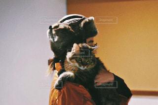 猫,動物,ふわふわ,ペット,人物,壁,抱っこ,ネコ,猫の日,222,2月22日
