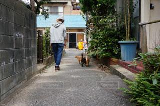 女性,1人,猫,自然,風景,建物,動物,屋外,島,散歩,道路,ペット,人物,道,歩道,ネコ