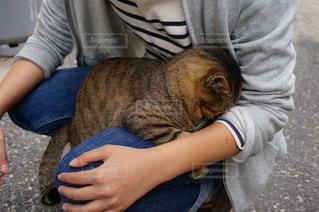 女性,1人,猫,動物,ふわふわ,ペット,子猫,人物,人,抱っこ,お昼寝,ふれあい,ネコ