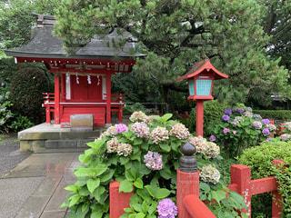 雨の日の神社と紫陽花の写真・画像素材[3418541]