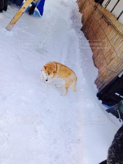 犬 - No.173329