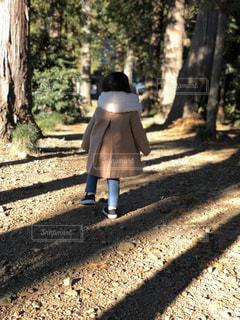 森の横にあるベンチに座っている人 - No.880235