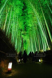 夜の真ん中の木の写真・画像素材[908119]