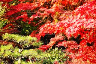 日本の秋の写真・画像素材[882125]