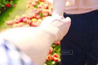 チューリップ畑を散歩するカップルの写真・画像素材[1583801]