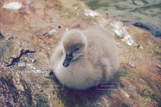 水の中を泳ぐ鳥の写真・画像素材[887278]