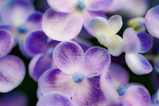 近くの花のアップの写真・画像素材[882589]