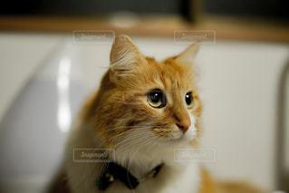 まんまる目玉の猫 - No.973327