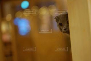 猫の隠れん坊 - No.973448