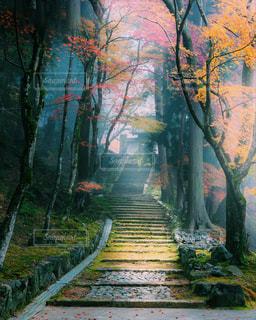 朝霧が立ち込める石段の写真・画像素材[1650906]