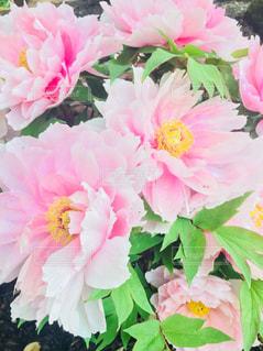 近くの花のアップの写真・画像素材[882652]