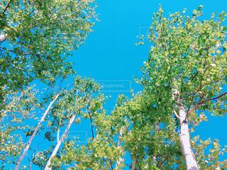 近くの木のアップ - No.883396