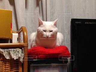 椅子に座って猫の写真・画像素材[894191]
