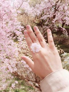 桜のネイルの写真・画像素材[1155660]