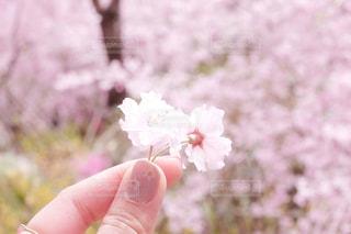 花を持っている手の写真・画像素材[1155665]