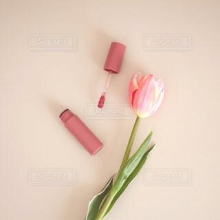 春色リップの写真・画像素材[4292949]