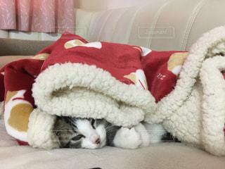 毛布の中の子猫の写真・画像素材[885261]