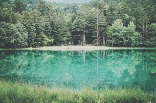 近くの緑豊かな緑の森の写真・画像素材[884689]