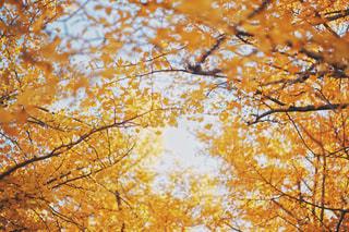 近くの木のアップの写真・画像素材[886921]