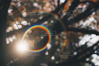 近くの木のアップの写真・画像素材[886931]