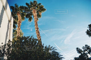 ツリーの横にあるヤシの木のグループの写真・画像素材[1110640]
