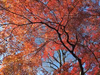 大きな木の写真・画像素材[886851]