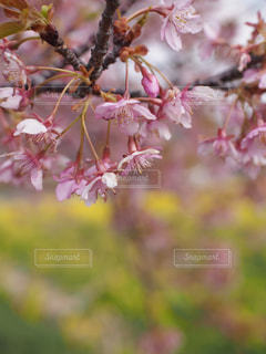 春の風物詩の写真・画像素材[885979]