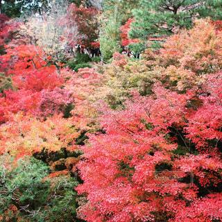 緑豊かな緑の森の上にピンクの花の木の写真・画像素材[922810]