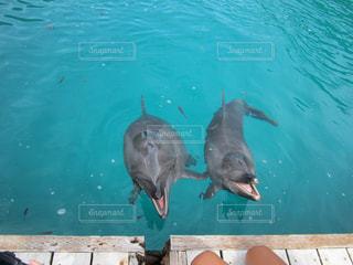 プールを泳ぐイルカ達 - No.886062
