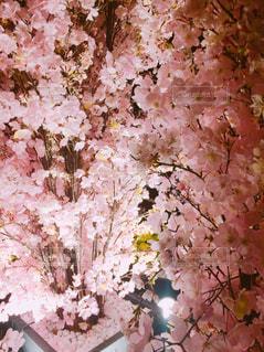 近くの花のアップ - No.886023