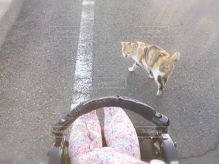 路上を歩く猫の写真・画像素材[1019940]