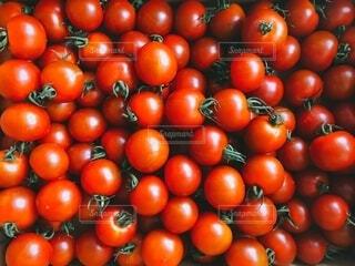 大量のトマトの写真・画像素材[3686463]