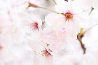 近くの花のアップ - No.912110