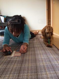 犬,室内,愛犬,ミックス犬,ダップー